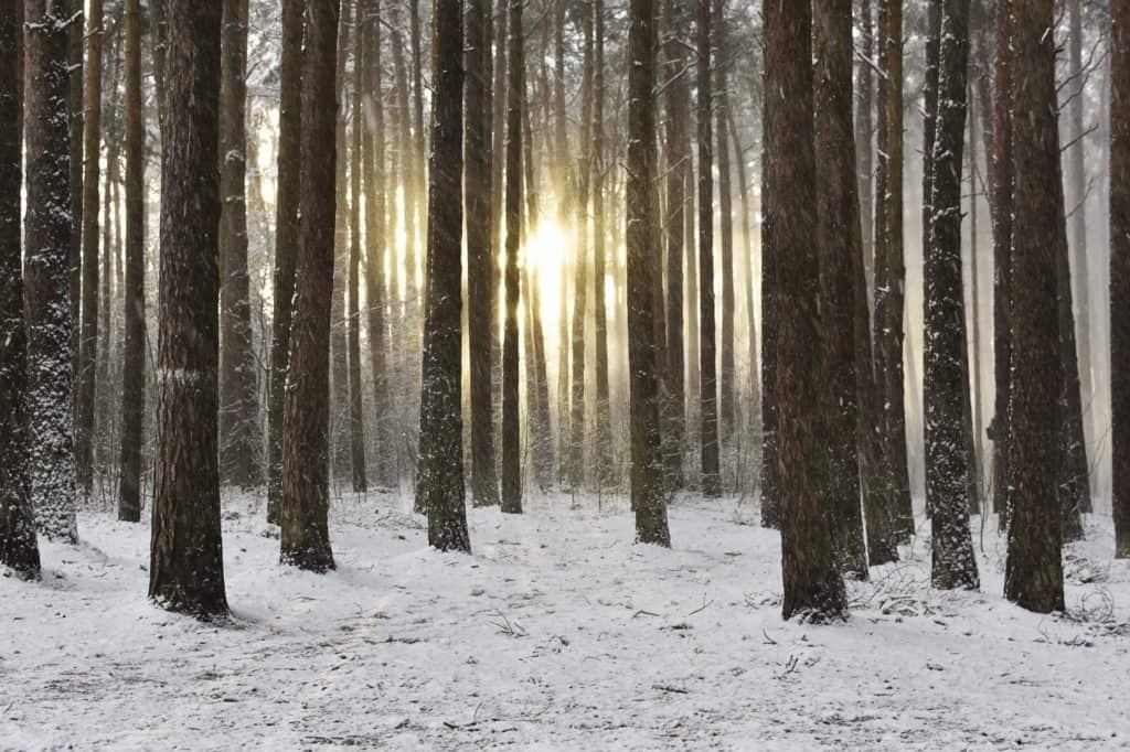 wald-im-winter