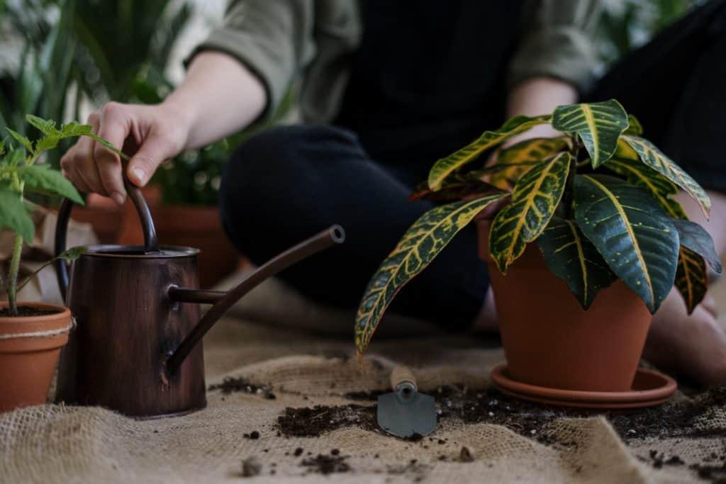 Neu Pflanzen einsetzen